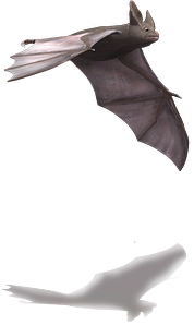 Bat-1.png
