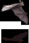 Bat-1-s.png