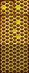 Beehive_A4.png