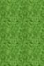 SK Grass.png