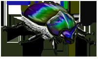 Beetle2.png