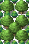 World_AT_Forest_BigTree_SythianBard.png