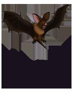 Bat 1.png
