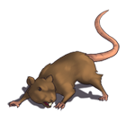 Rat 1.png