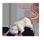 White Rat.png