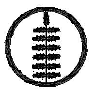 Xignotus
