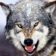 WolfTJD
