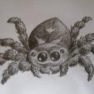 Sinister Spider