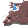 sleepy_sealion